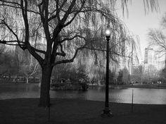 Public Garden, Boston, MA.  http://marcphotogallery.com/public-garden.html
