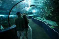 Ripley's Aquarium is a great experience for all ages!