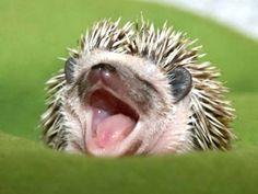 Baby hedgehog!!!