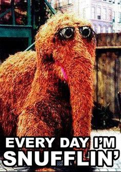 funni stuff, parties, giggl, big bird, funny quotes