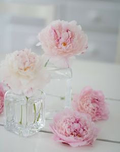 In the Country: pink peonies