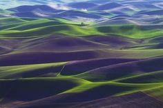 Palouse Springtime Velvet-Green, Eastern Washington