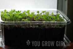 Growing Microgreens on a Windowsill - You Grow Girl
