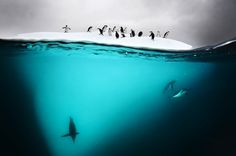 Stunning Moments of Life Under the Sea