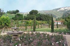 Rose Story Farm in Carpinteria, CA