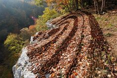 pines, environment art, cone land, pine cone, pinecon art, pine nut, art installations, autumn land art, sylvain meyer