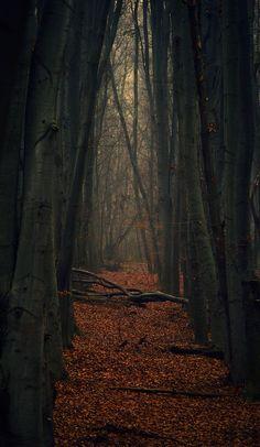 Den Didenko, Dark forest  in Ukraine