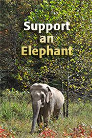 Support an Elephant!