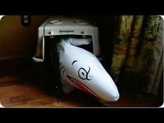 Dachshund's hilarious battle with an inflatable shark (VIDEO) » DogHeirs | Where Dogs Are Family « Keywords: inflatable toy, Dachshund, shark