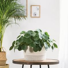 Houseplants products | Dobbies
