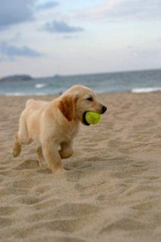 Puppies on the beach, so cute