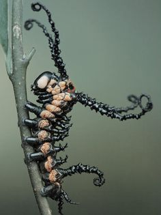 This is one cool caterpillar!
