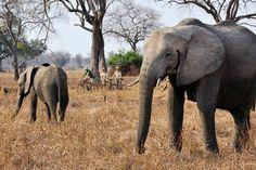 Best new safari trips   Zambia travel, Photo 2 of 9 (Condé Nast Traveller)