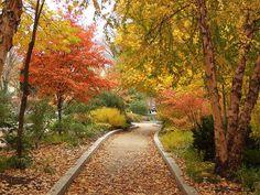 smithsonian butterfli, garden room, butterfli garden, habitat garden, butterfli habitat