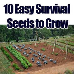 prepping/survival | 10 Easy Survival Seeds to Grow | Prepping Ideas - Are You Prepared ...