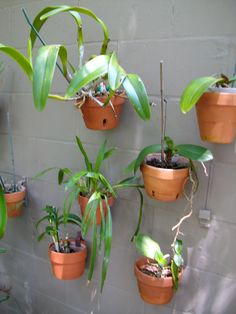 Make wall look good and create more space by hanging plants and orchids using hangapot...hangers can be painted to match the wall with Fusion or paints for vinyl outdoor plastics