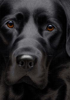 LABRADOR ??? Who can resist a lab puppy?! ??? Artist Nigel Hemming