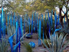 Bottle Tree Forest - Image from a great web site! desert, botan garden, bottle trees, blue pots, bottl tree, glass sculptur, chihuli glass, glass garden, botanical gardens
