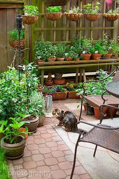 Bench stand garden with hanging plants