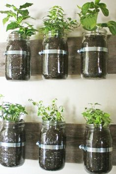Clever way to grow herbs! Mason Jar Storage Shelf by RockPaperSawzall on Etsy, $25.00