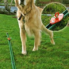 The Dog Track Give your pet room to run without expensive fencing!