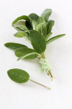 Sage! such a romantic herb to cook a delicious meal with a pretty girl