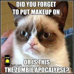 grumpi cat, grumpy cats