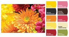 Fall Color Schemes - create your own!