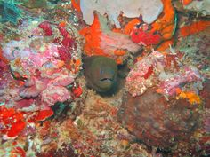 Let's explore the underwater sea of Jailolo Bay's, West Halmahera, Indonesia with its many unique underwater biota!