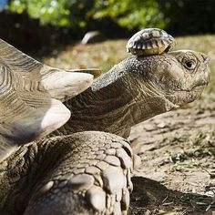 140 year old mom 5 days baby