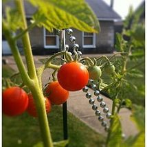 Hometalk :: Dont leave your tomatoes hanging around defenseless. Plant a few of t…