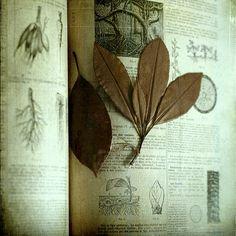 Herbs:  #Herbal.