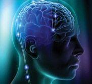 Inside the Brain: An Interactive Tour
