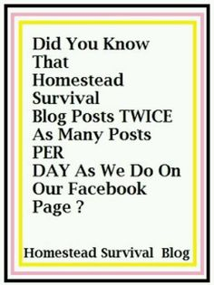 Homestead blog