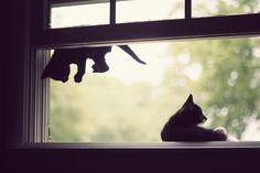 Black kittens