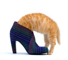 Puss 'N boots by edwindejongh, via Flickr