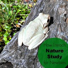 Tips, encouragement and supply list for anyone looking to get started with nature studies. A great way to explore God's creation with your whole family.