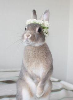#Easter #Spring