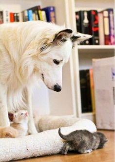 Big dog, tiny kittens