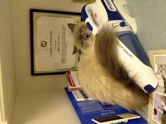 If I hide behind this maybe the vet won't see me!!