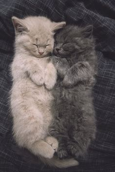 cuddle time