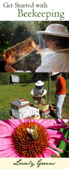 Do you want to be a Beekeeper? Here's a short but informative post on why you should keep bees and how to get started! #beekeeping #bees #honey #howto #selfsufficiency