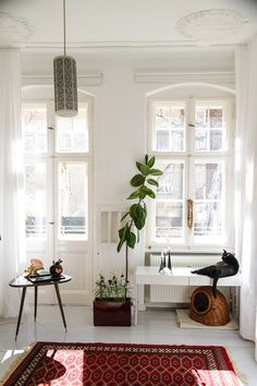 plant, cat beds, living rooms, rug, window, berlin, baskets, apartments, painted floors