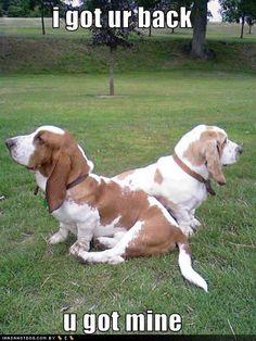 funny animals, beagl, funny dogs, animal funnies, bassett hound funny