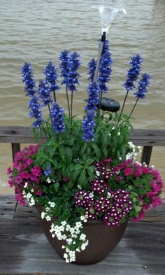 Great Container garden with a hardy sun loving group of plants that are easy to grow: Salvia Blue Victoria, Bacopa, Verbena, Superbells Cherry Red