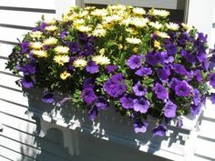 michell jacobi, chang space, petunia, daisi, outside spaces, garden, cape cod, flower boxes, window boxes