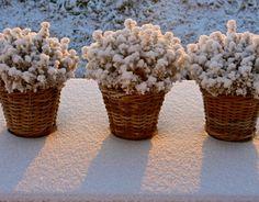 Pots in Winter