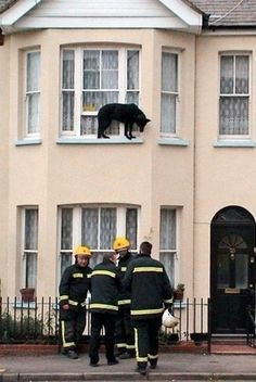 animals stuck in odd places