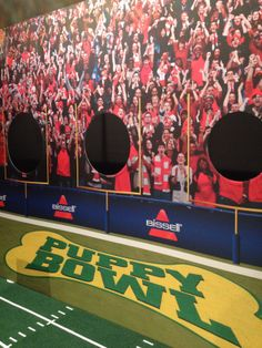 The live Puppy Bowl experience in NYC is now open! live puppi, bowl experi, puppi bowl, bowl 2014