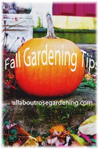 Tips for putting the gardens to bed. Do you know what to do in the Fall for a better garden next year? Learn here.....http://www.allaboutrosegardening.com/Fall-Gardening-Tips.html